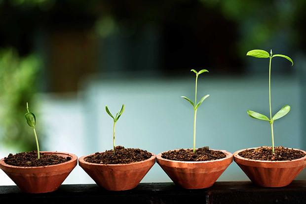 ondersteuning van ontkieming tot volwassen bedrijf, start-up, indigo onderneming